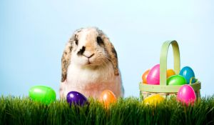 stratford_easter_bunny_2