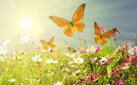 butterfly-poem