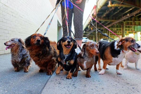 teach-dog-walk-leash